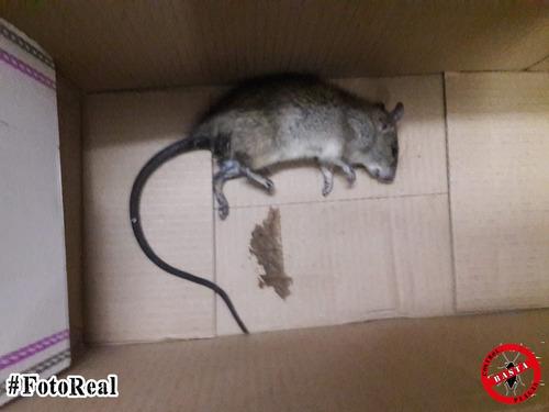 fumigaciones cucarachas, ratas, casas edificios tarjeta 12 c