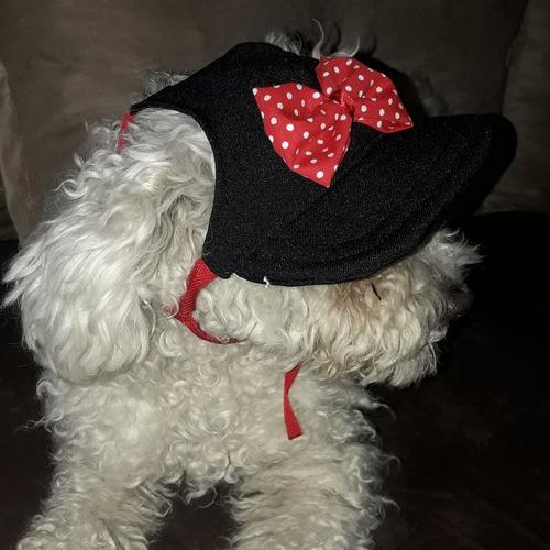 gorro para perro perra. ropa mascotas