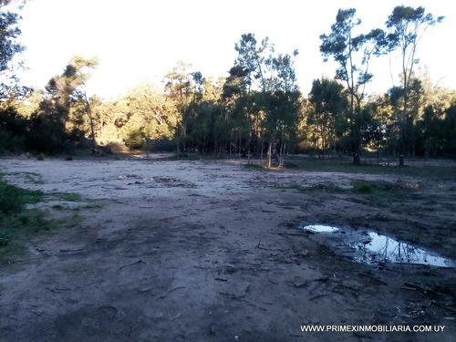 gran terreno, amojonado  y limpio.