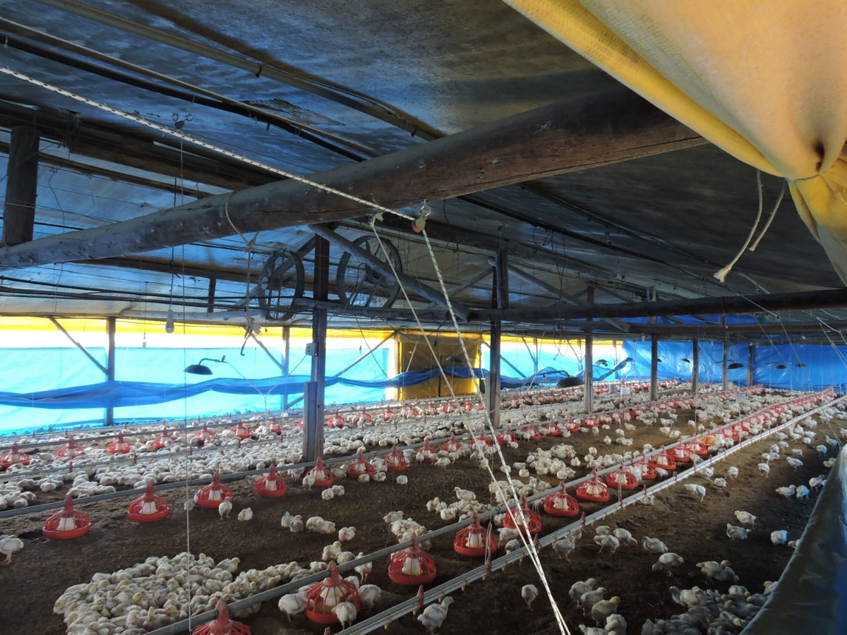 granja avicola inversión con renta inm. harretche