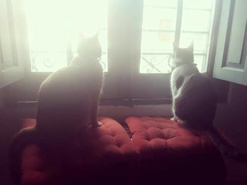 guardería hotel de gatos