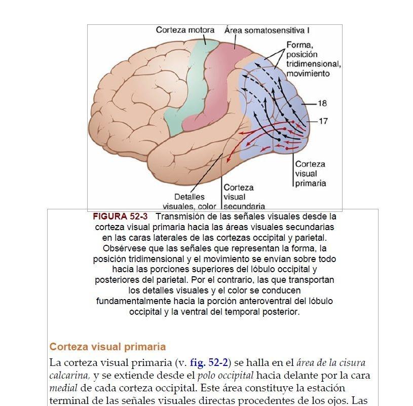 Guyton Y Hall Tratado De Fisiología Médica 13º Ed (completo) - $ 149 ...