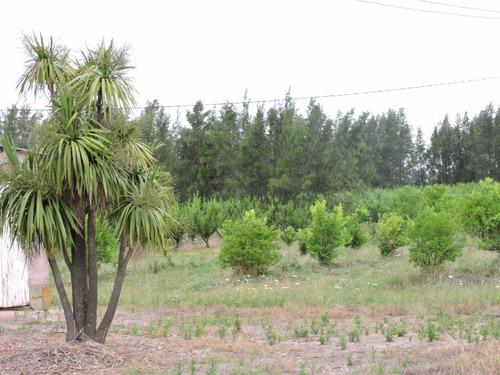 hermosa quinta en juanico