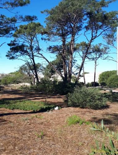 hermoso terreno en la mejor zona del pinar. dunas.