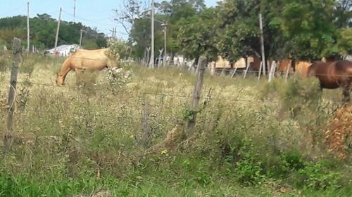 hermosos 3 terrenos frente al rio uruguay bien alto