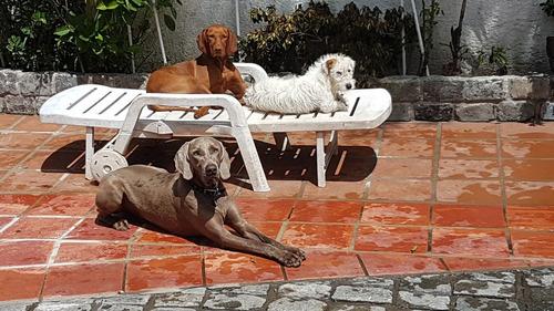 hotel alojamiento canino borntobeloved/vidadeperros