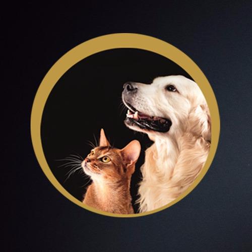 hueso lonja para perros 1k / envio gratis a todo el pais