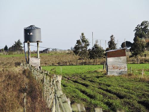 ideal para engorde de ganado en alta intensidad