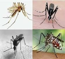 insecticida organico natural