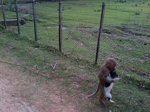 jack russell cachorros. también permutas.