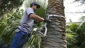 jardineria  limpieza de terrenos tala de árboles   097972586