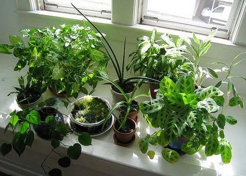 jardineria y mantenimiento de plantas de interior de casas
