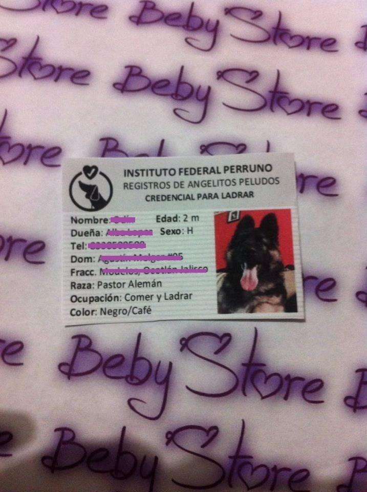 Kit Imprimible Ife Para Mascotas Nuevo - $ 58.00 en Mercado Libre