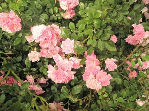 la conejera - blrio. las flores