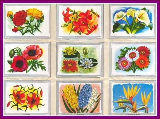 L mina 45x30 cm vyc104 reino vegetal flores y for Plantas ornamentales con sus nombres lamina