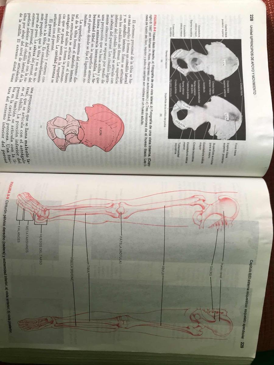 Increíble Anatomía Y Fisiología Capítulo 8 Opinión Respuestas Patrón ...