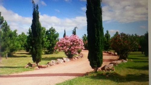 magnífica chacra con hermosa casa y olivares en ruta 12
