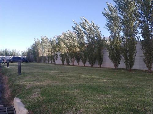 mantenimiento áreas verdes. corte césped grandes extensiones