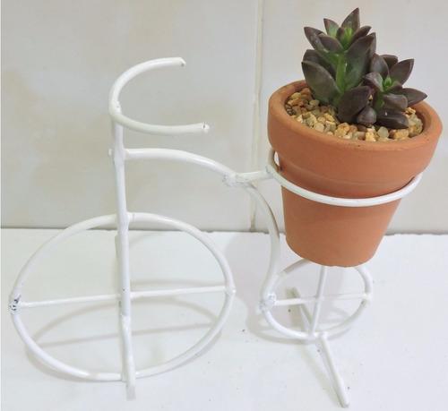 mini terrarios cristal, cactus miniatura, plantas suculentas