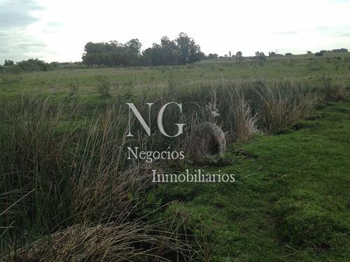 muy buen campo en costas del tala (san antonio)