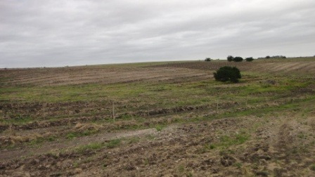 muy buena fraccion de 36 ha  campo agricola ruta nº2