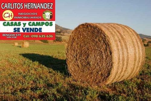 necesitamos arrendar campos ganadero agricola tambo forestal