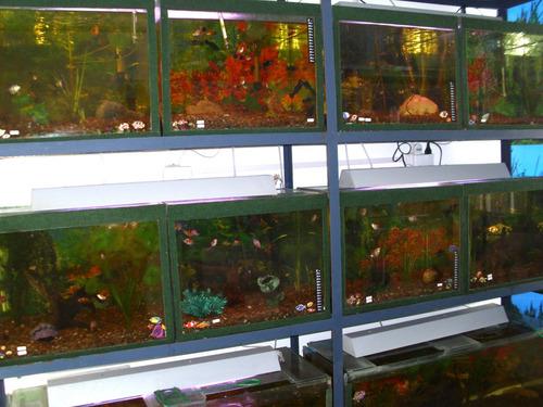 nitrivec bacterias beneficciosas que limpian nuestro acuario