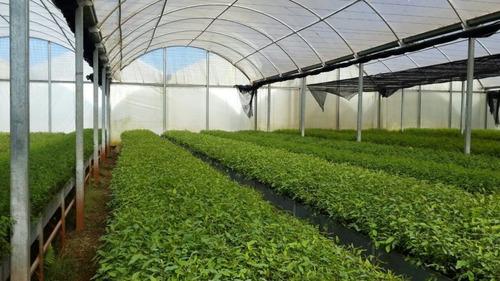 nylon invernaculo agro filtro uv - 120 micrones tri capa