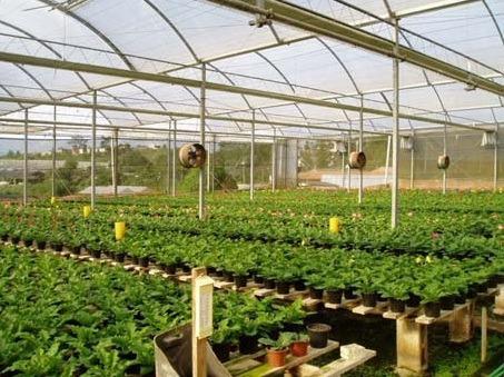 nylon para invernaculo uv - 150 micrones tricapa agroinsumos