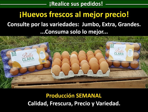 oferta huevo especialnº1 60g por mayor 12maples huevos finos