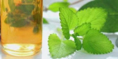 oleo essencial menta 2l + 2l oleo essencial de rosa mosqueta