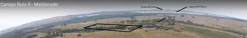 oportunidad chacra de 11,5 hectáreas - maldonado - ruta 9