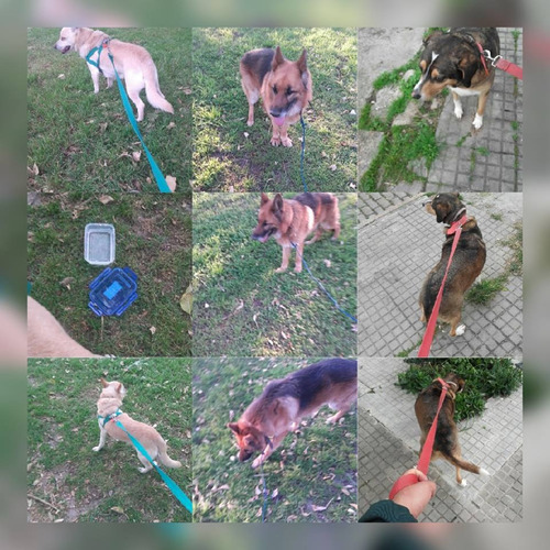 paseador de perros!!!