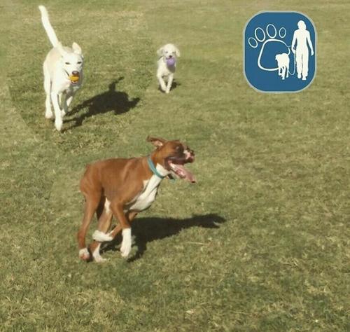 paseo de mascotas - 90 minutos - punta carretas