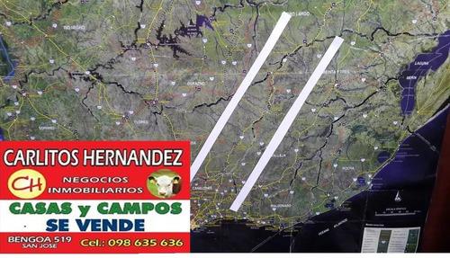 pedido d campo ganadero p arrendar 200 a 2000 has en florida