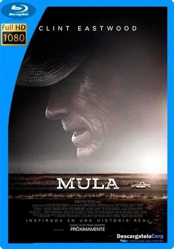 peliculas estrenos pack 12 dvd