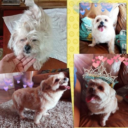 peluquería canina a domicilio todos los cortes esquilas baño