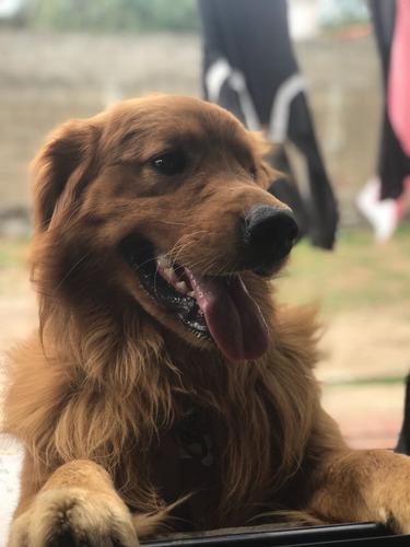 pensionado canino familiar en lagomar