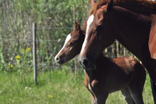 pensionado de caballo - paseos a caballo- centro ecuestre