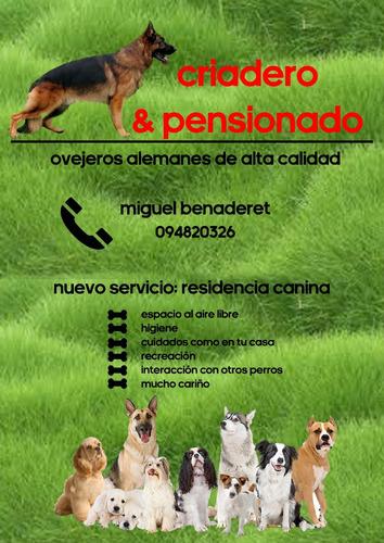 pensionado de perros