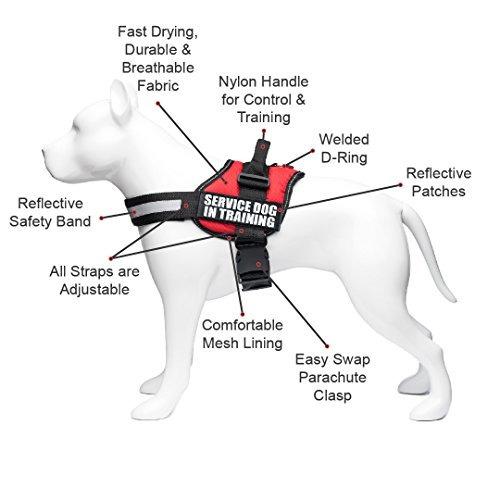 Entrenamiento para perros de servicio