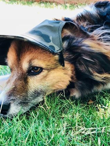 perro. para perro ropa para