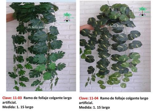 plantas colgantes de hojas elegantes vbf