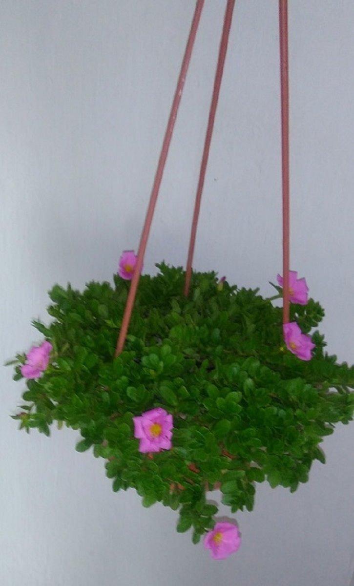 Plantas Suculentas Con Flores En Maceta Colgante 320 00 En