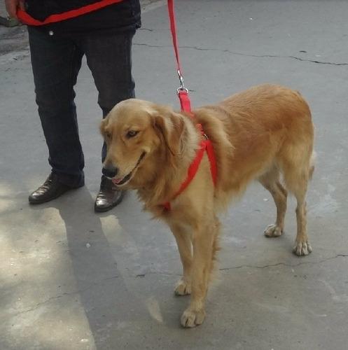 pretal y correa reforzado para perros de razas grandes