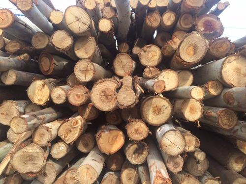 puntales de eucaliptus 3 mts / madera