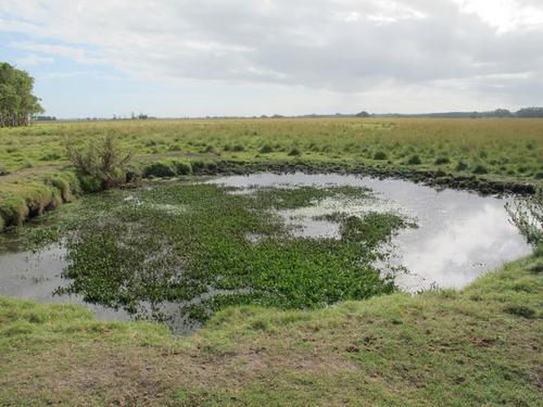 punto río | excelente campo criador con costa a laguna de castillos