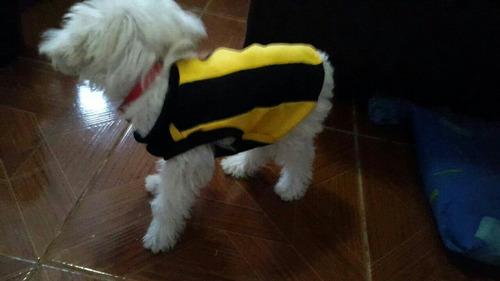 ropa para perro