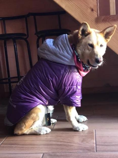Ropa Perro Grande North Face Por Pedido Lo Mejor!!. Financia