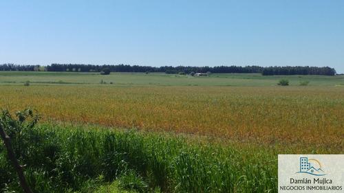 se vende preciosa chacra de 6 hectáreas,km47 ruta1